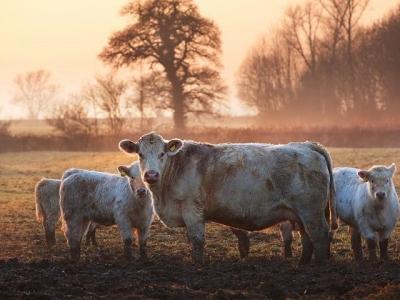 Κτηνοτροφία - Πτηνοτροφία